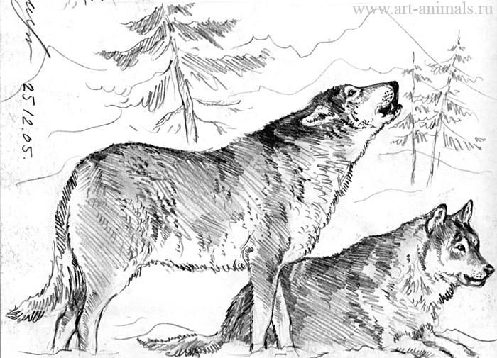 Волк 2 карандаш волк 3 карандаш волк 5